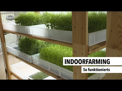 Die Zukunftstechnologie Indoorfarming
