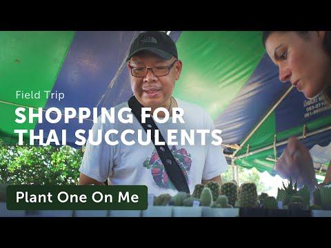 Shopping Thailand's Cactus & Succulent Fair — Plant One On Me —Ep 138