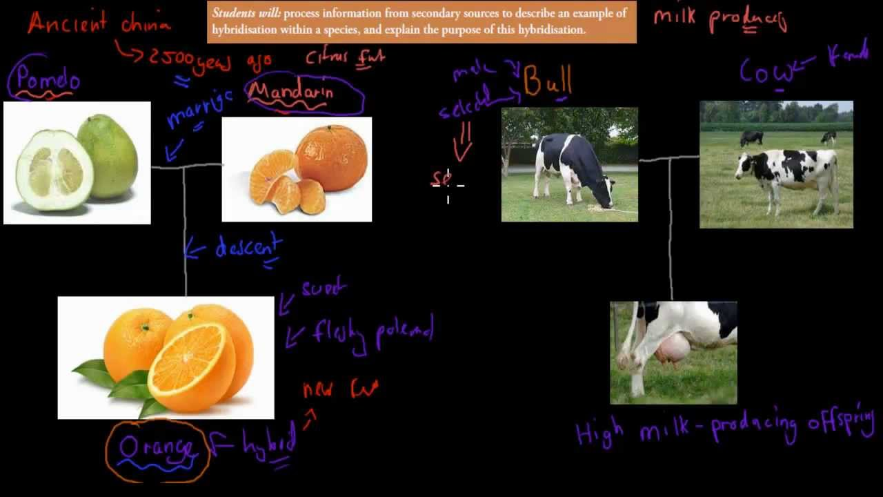 10 Hybridisation Within A Species Hsc Biology Youtube