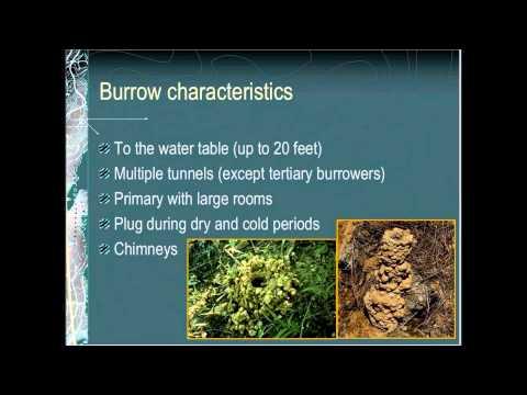 An Introduction To Crayfish
