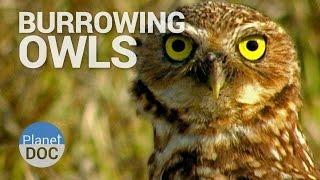 Burrowing Owls  Wild Animals - Planet Doc Full Documentaries