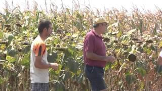 Rumunia. Skutki zastosowania fałszywych środków ochrony roślin.