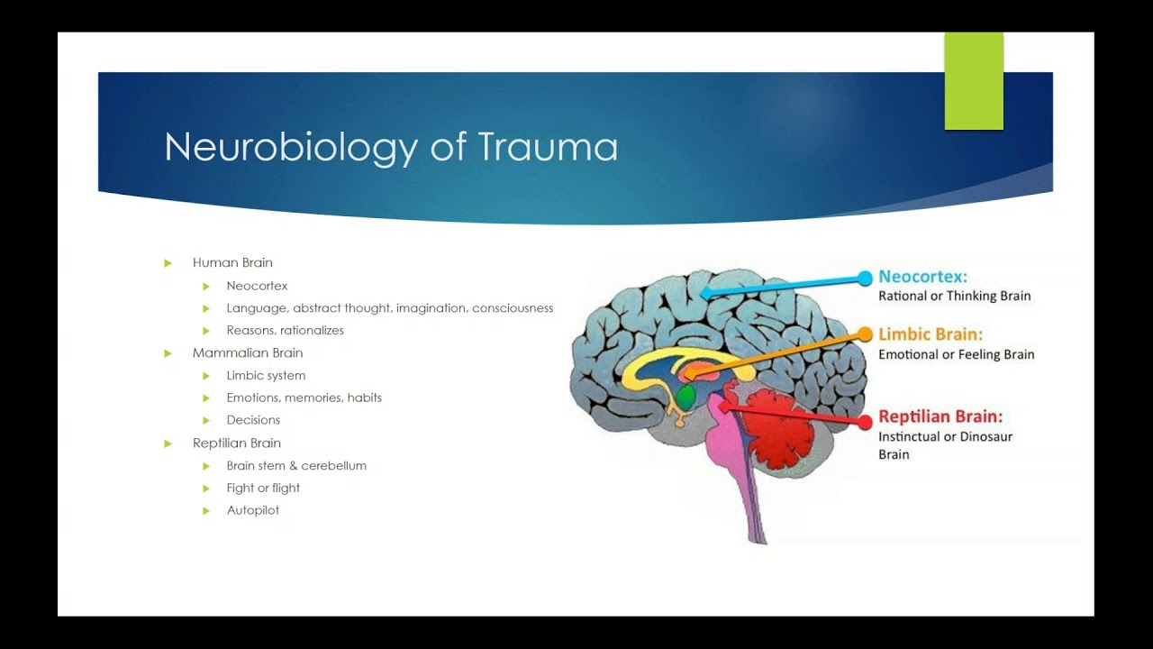 trauma & the body: how trauma manifests in the body and informs approaches  to healing