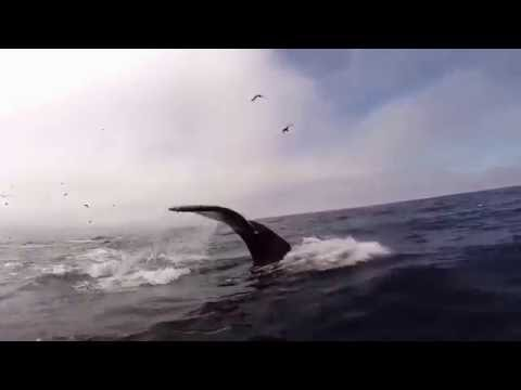 Morro Bay Whale Shot Underwater from an SUP The Paddleboard Company