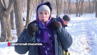 Владивосток: собаки спасают людей из-под снега