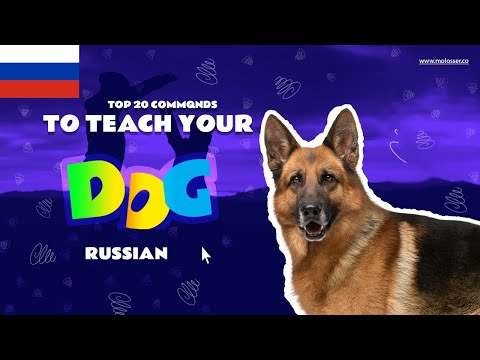 Teach Your Dog Commands In Russian (20 Common Words)