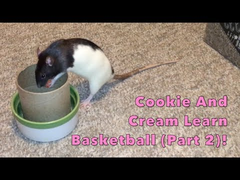 Tiny Rats Learn Basketball (Part 2)!