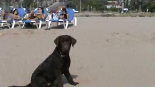 Tango en la playa nadando (5 meses)