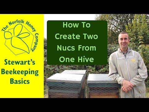How to Split a Beehive into 2 Nucs and Parent Colony #Beekeeping Basics  - The Norfolk Honey Co