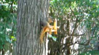 Squirrel Chair Feeder - Sitting On The Arm Eating
