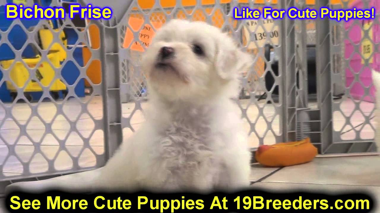 Bichon Frise, Puppies, For, Sale, In, Dover, Delaware, DE, Long Neck, Ocean  View, Woodside East, Tow
