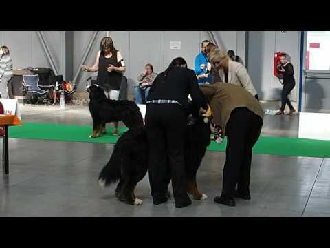 MVP Prague Expo Dog 16.4.2017 - posouzení