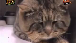 Смішні приколи про тварин Вусо-лапо-хвіст 10