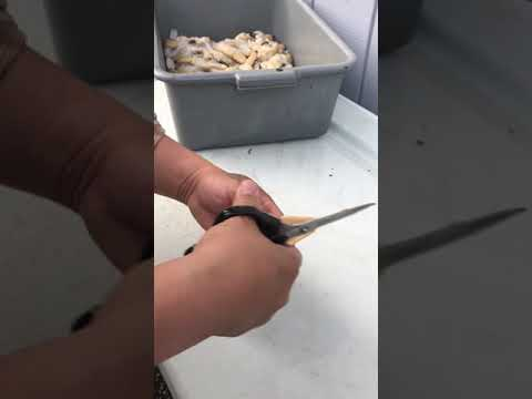 Cleaning Razor Clams
