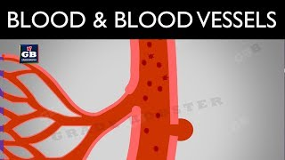 #Blood : blood vessels and lymph : life processes : ncert class 10 : science :biology :cbse syllabus