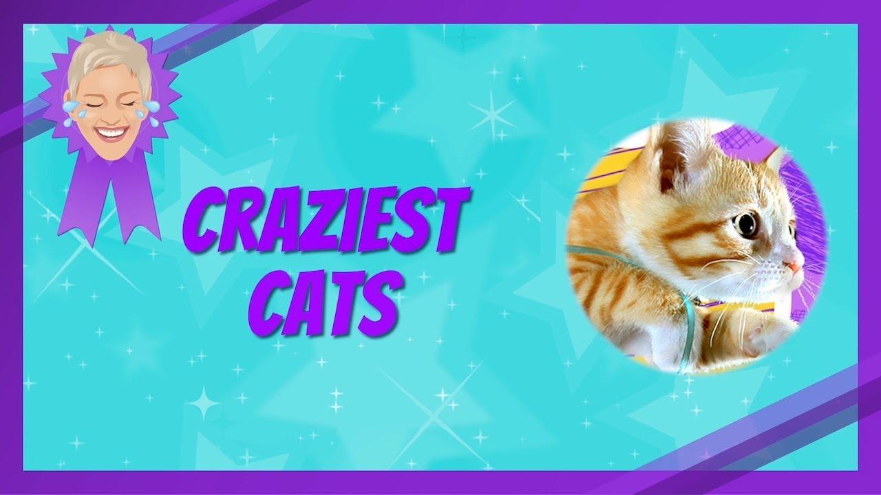 Craziest Cat Videos Youtube
