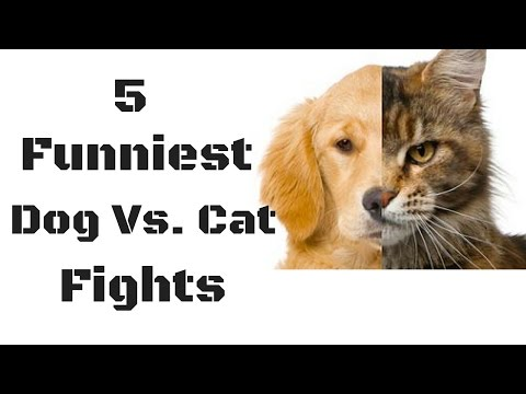 "5 Funniest ""Dog Vs. Cat"" Fights  