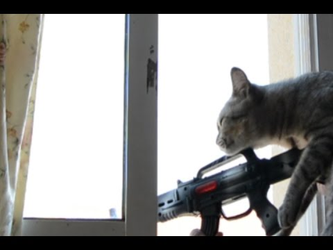 Gato disparando a Personas Sniper Cat EPIC FAILS