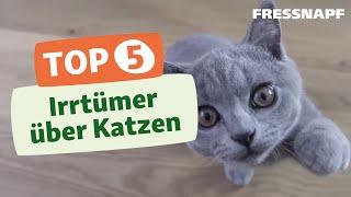 Top 5 Irrtümer über Katzen