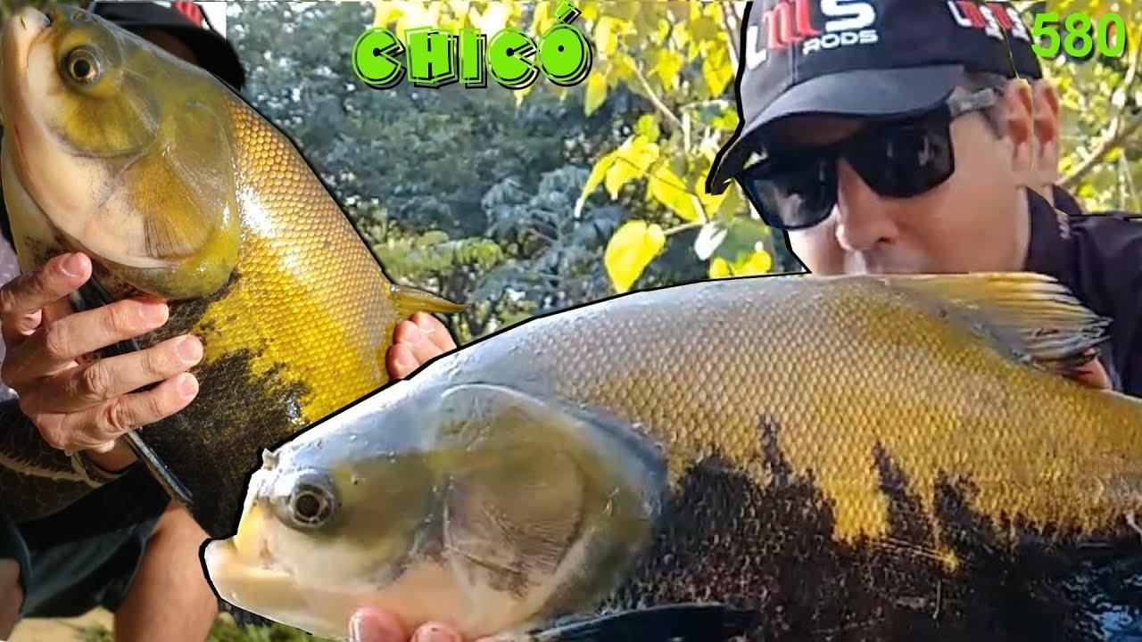 Pesque Pague do Chicó - O futuro reduto dos grandes Tambaquis em Goiás