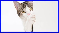 Wenn Katzen an geschlossenen Türen kratzen: Training
