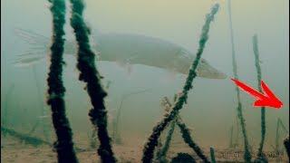 Рыбалка на ЖИВЦА! ЩУКА и Подводная съемка