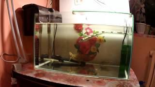 Красноухая черепаха, СЕКРЕТ чистой воды