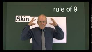 Skin 1, Skin and the rule of 9