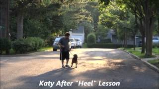 "Heel Before And After: Ecollar Training Northern New Jersey ""katie"""