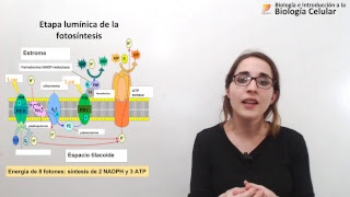 Biología Celular: Etapa lumínica de la fotosíntesis (12/10/2018)