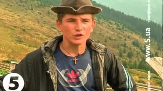 Нова карпатська зірка - вівчар Михайло про румунських собак