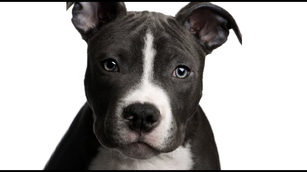 No Kill in Motion - Use of Breed Labels for Shelter Dogs