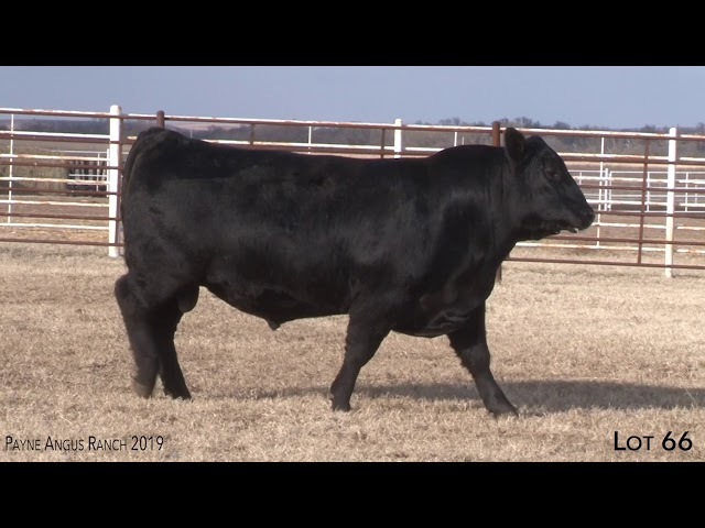 Payne Angus Ranch Lot 66