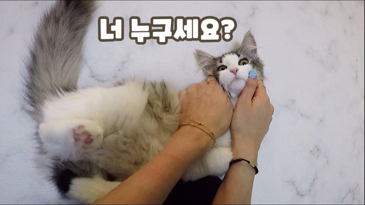 낯선사람을 처음 본 고양이 반응🙀