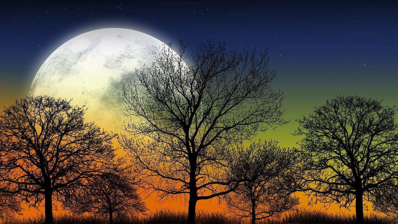 Download Beautiful Relaxing Music - Night Nature Sounds, Beautiful Piano, Meditation Music, Stress Relief