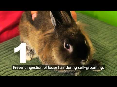 How to Choose a Healthy Pet Rabbit and Grooming Tips @ Tampines 1