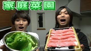 【シェアハウス】自分達で育てたレタスで焼肉パーティー開催!! thumbnail