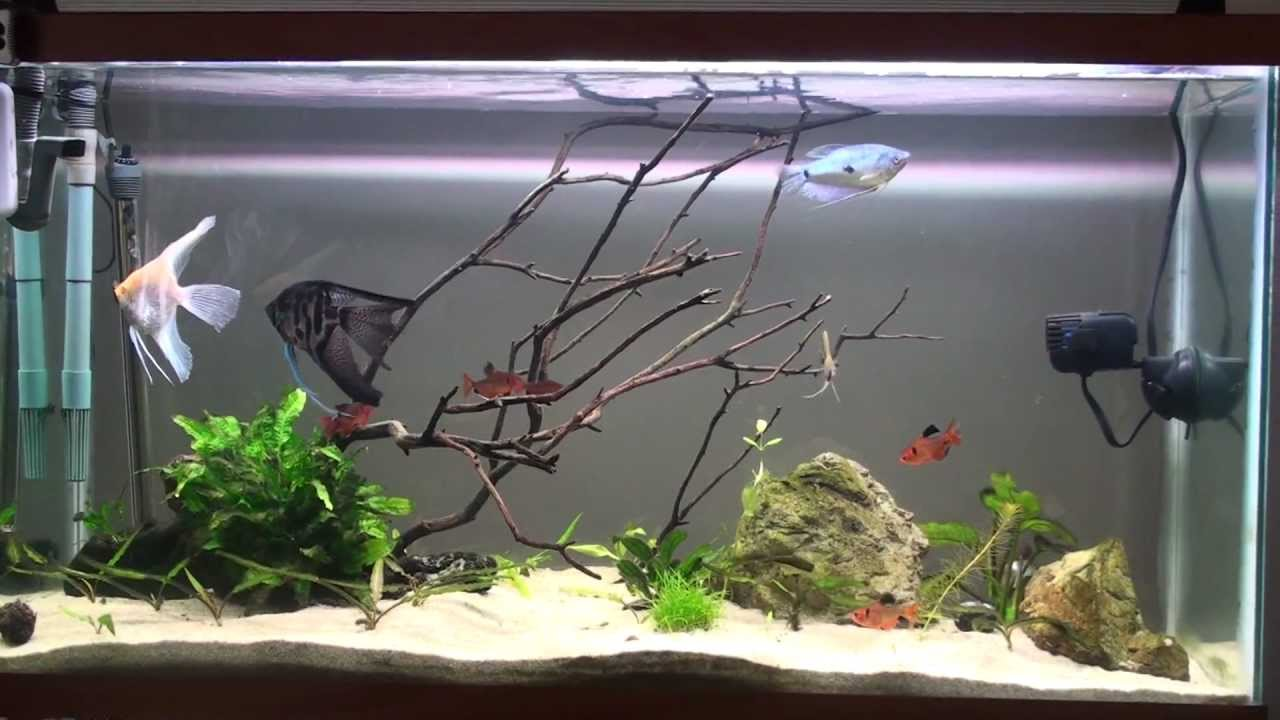 40 Gallon set up day 1 Angelfish - YouTube