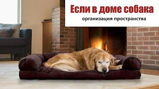 Стрим #7 / Если в доме собака. Организация места