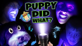 PET LIGHT DETECTOR?? Puppy in Trouble! (FUNnel Vision Oreo Blacklight Vlog)