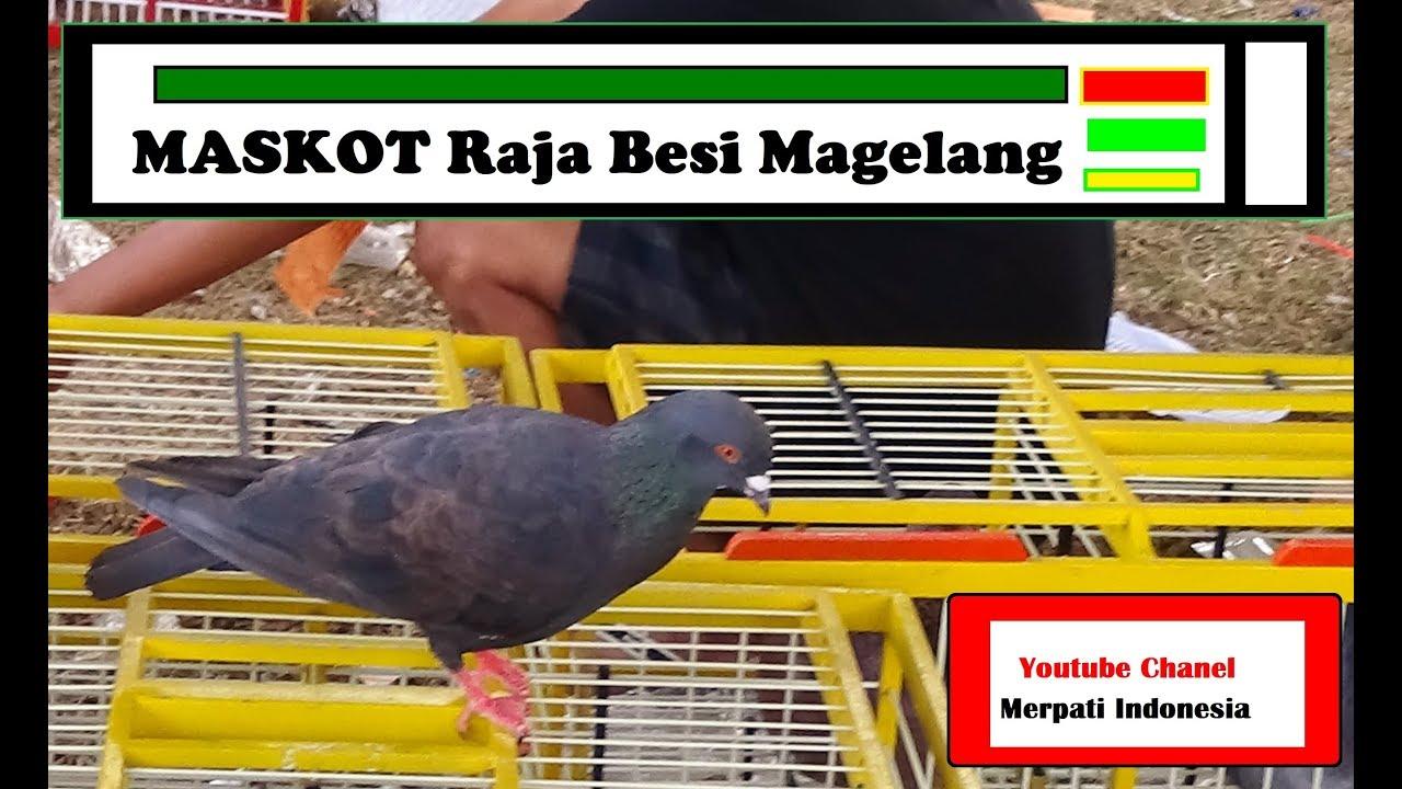 Black Sweet Raja Besi Magelang By Merpati Kolong Mmt