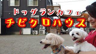 COO☆CAIさんでトリミングした後、近くにドッグランがあるって調べて行きました。なんとそこは自宅がドッグランカフェになってる素敵なところ...