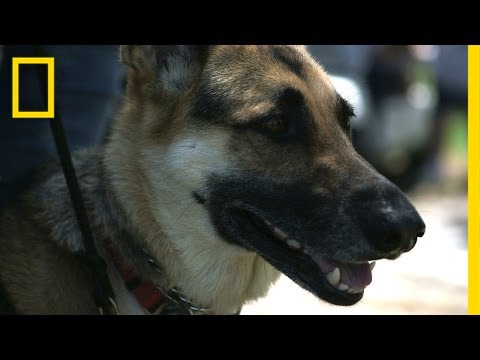 Dog Helps Veteran Cope With PTSD, Diabetes  National Geographic