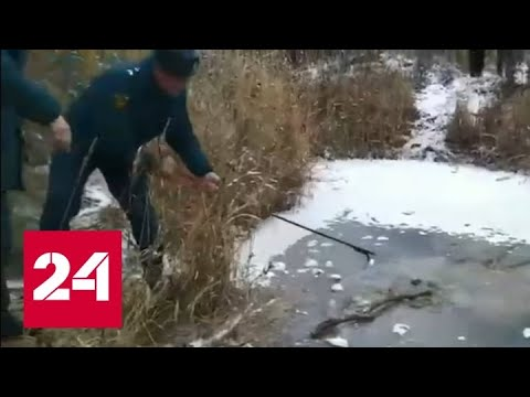 Тело пропавшего под Смоленском мальчика нашли в пруду подо льдом - Россия 24