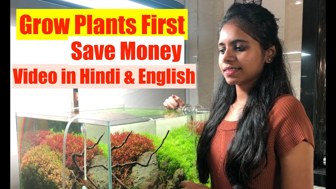 How To Grow Aquatic Plants in Aquarium | New Aquarium ...