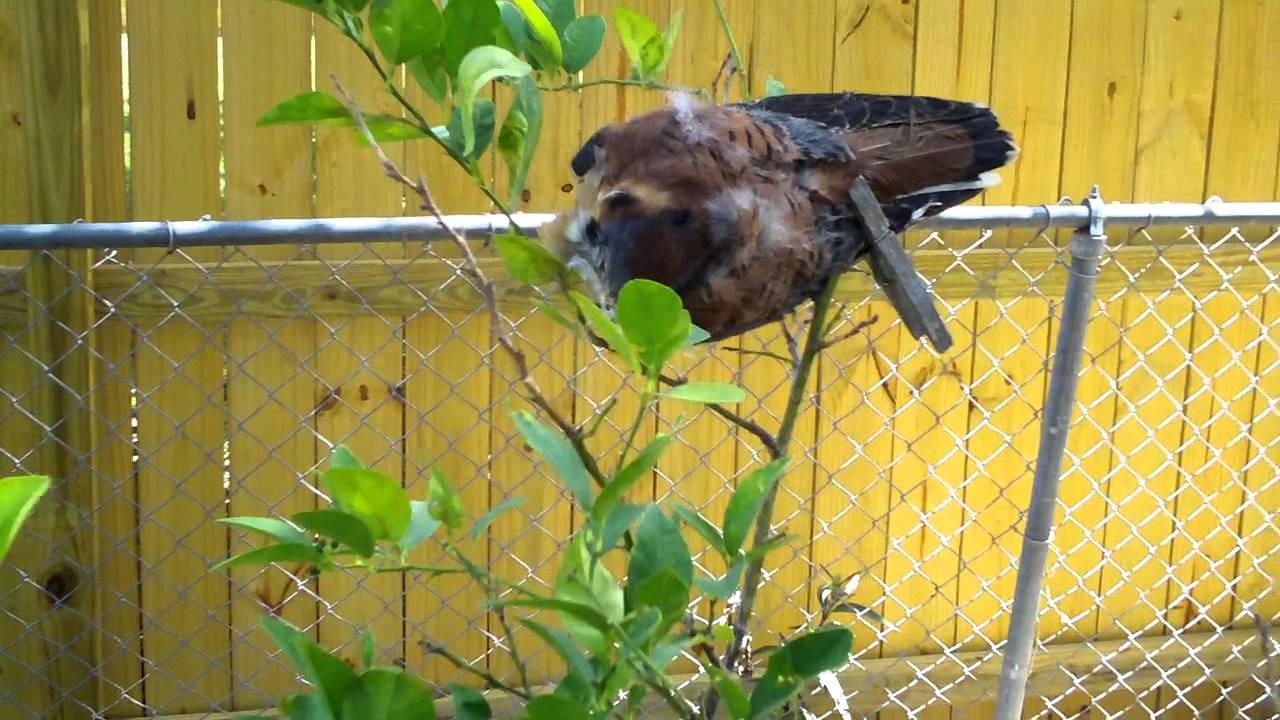 How To Scare Away Birds From Your Garden Plants You