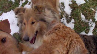 Снежный вечер и бесснежное утро // собаки и я