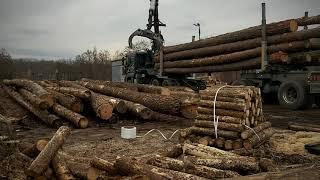 Dzień pracy kierowcy w transporcie drewna.Transport Leśny -  Leśny włóczykij