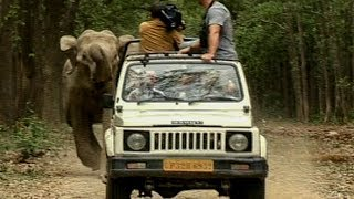 Wild Elephants Charge after Camera Crew | Deadly 60 | Earth Unplugged thumbnail