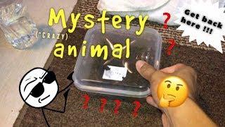 """My new """"CRAZY MYSTERY PET"""" !!! thumbnail"""